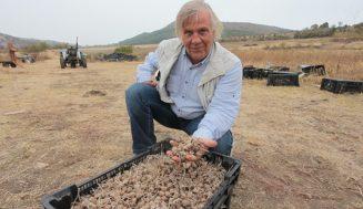 Родопчанин отглежда най-скъпата подправка в света, печели 37 000лв. за 1 килограм